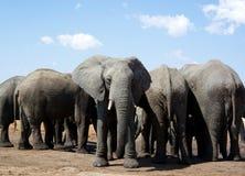Waterhole dos elefantes Fotos de Stock