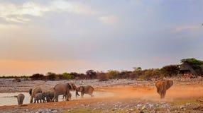 A waterhole at dusk in Etosha with elephants dusting themselves. A waterhole at dusk with elephants dusting and bathing in Etosha national park stock photography