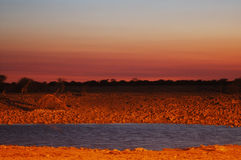 Waterhole in Etosha Immagine Stock