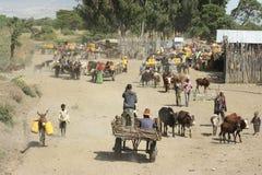 Waterhole, grande Rift Valley, Etiópia, África Foto de Stock Royalty Free