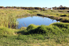 Waterhole in Green Grassy Field Royalty Free Stock Image