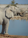 Waterhole Royalty Free Stock Photos