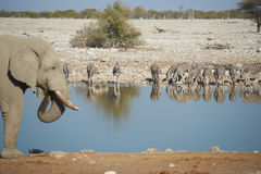 Waterhole Royalty Free Stock Image