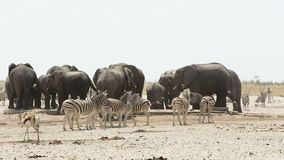 Waterhole mit Elefanten, Zebras, Springbock und orix Afrika Safari Wildlife stock video footage