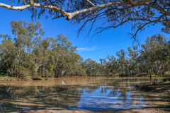 A waterhole in the Moonie River. Trees are reflected in the muddy waters of the Moonie River at Nindigully Royalty Free Stock Images