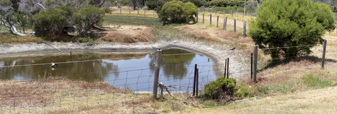 Waterhole in a paddock  in summer. Stock Photo