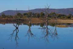 Waterhole Reflections Stock Photo