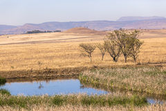 Waterhole Rural Landscape Royalty Free Stock Photos