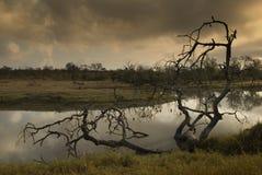 Waterhole at Sabie Sand Stock Photography