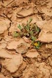 Waterhole seco Fotos de archivo libres de regalías