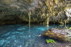 Waterhole subterrâneo imagens de stock