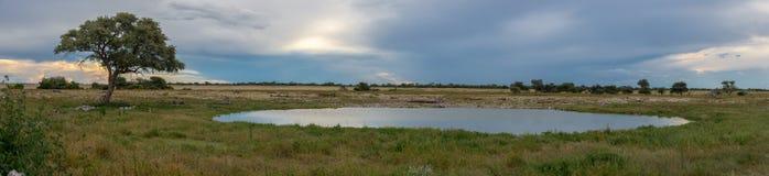 Waterhole w Okaukuejo Fotografia Stock