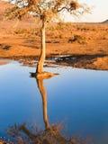 Waterhole w południe - afrykanin rezerwa z drzewem i ptakami gniazduje ref Zdjęcia Stock