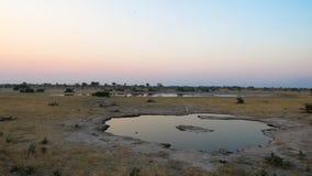 Waterhole for wild animals in Botswana. Small waterhole for animals in Botswana, with blue sky as backdrop stock image