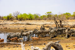 Waterhole wildlife viewing Stock Images