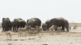 Waterhole z słoniami, zebrami, antylopą i orix, Afryka safari przyroda zdjęcie wideo