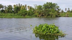 Waterhyacint die in de rivier drijven Oops! Uw beschrijving heeft slechts 6 woorden uw beeld meer kansen geven om te verkopen doo stock foto