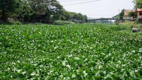Waterhyacint op kanaal Stock Foto's