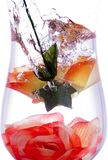 Waterige flower10 Royalty-vrije Stock Foto