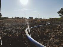 watering stock fotografie