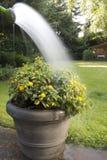 Watering Stock Image