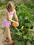 Watering. Little pretty girl watering at the vegetable garden Royalty Free Stock Photo