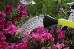 watering royalty-vrije stock afbeelding