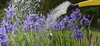 watering royalty-vrije stock foto's