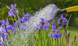 watering royalty-vrije stock afbeeldingen