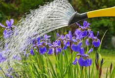 watering stock foto