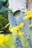 Watering Royalty Free Stock Photography