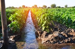 Watering of agricultural crops, countryside, irrigation, natural watering, village green royalty free stock photography
