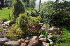 Watering Alpine garden hose. Alpine garden watering hose in the garden stock image