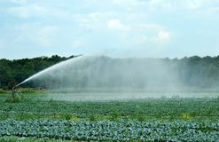 Watering a cabbage field Royalty Free Stock Image