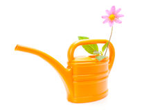 Watering can. With a flower on a white background Royalty Free Stock Photography