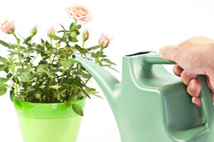 Free Watering Can Stock Photo - 50010510