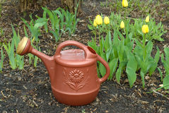 Watering Can. A brown watering can sitting in the flower garden near some yellow tulips Royalty Free Stock Photo