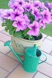 Watering can. Flower pot with petunias and green color watering can Stock Photography