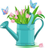 Watering can. With bouquet of tulips Royalty Free Stock Image