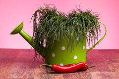 Watering Can With Agretti And Chili Peppers Royalty Free Stock Photos