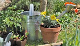 Watering can anf flowers Stock Photography