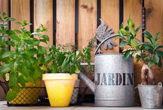 Watering can and aromatic herbs Royalty Free Stock Photos