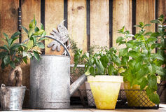 Watering can and aromatic herbs garden Royalty Free Stock Images