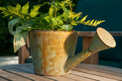 Watering Can as Gift Basket in Warm Light Royalty Free Stock Photography