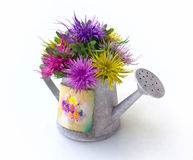 Watering-can With Asters of Different Colors Royalty Free Stock Images