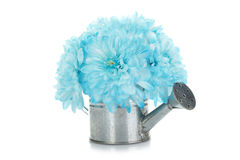 Watering can with blue flowers Stock Photography