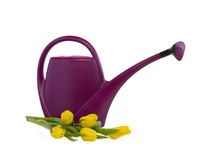 Watering can and bouquet of yellow tulips Royalty Free Stock Images