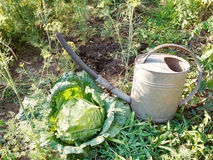 Watering can and cabbage in garden Stock Images