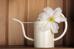 Watering can clematis Royalty Free Stock Photo