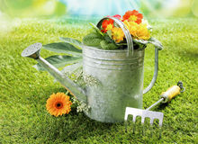 Watering can with summer flowers Stock Image